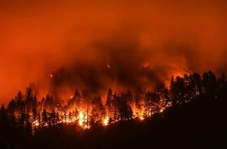 tree-fire